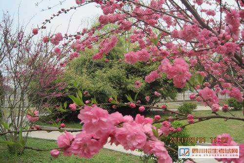 四川省工业贸易学校(公办)春意校园