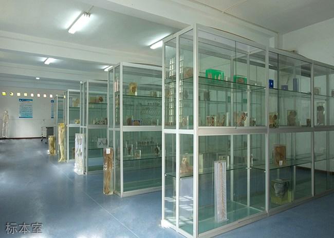 重庆南丁卫校标本室