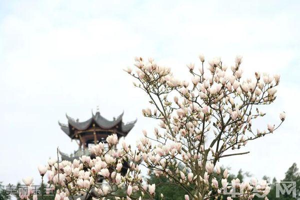 西南医科大学附属医院卫生学校(泸州卫校)美丽玉兰