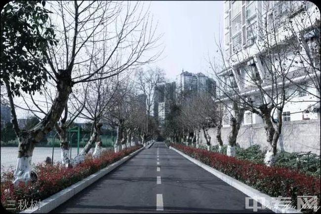 贵州电子信息职业技术学院三秋树