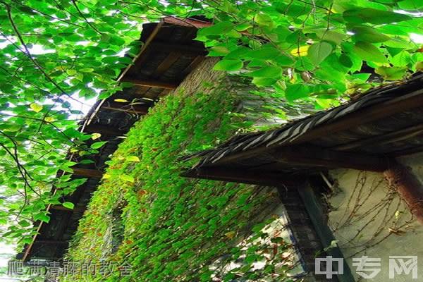 ☆四川大学成人继续教育学院-爬满清藤的教舍