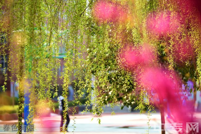 西安铁一中滨河学校[普高]-春色满园