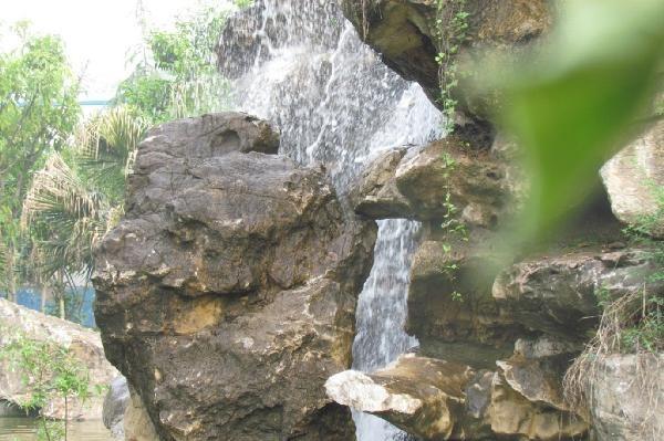 五月花-华西公园假山